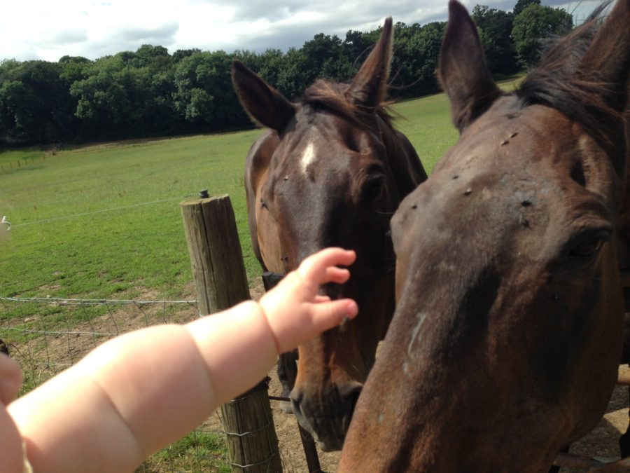 Baby meets horses