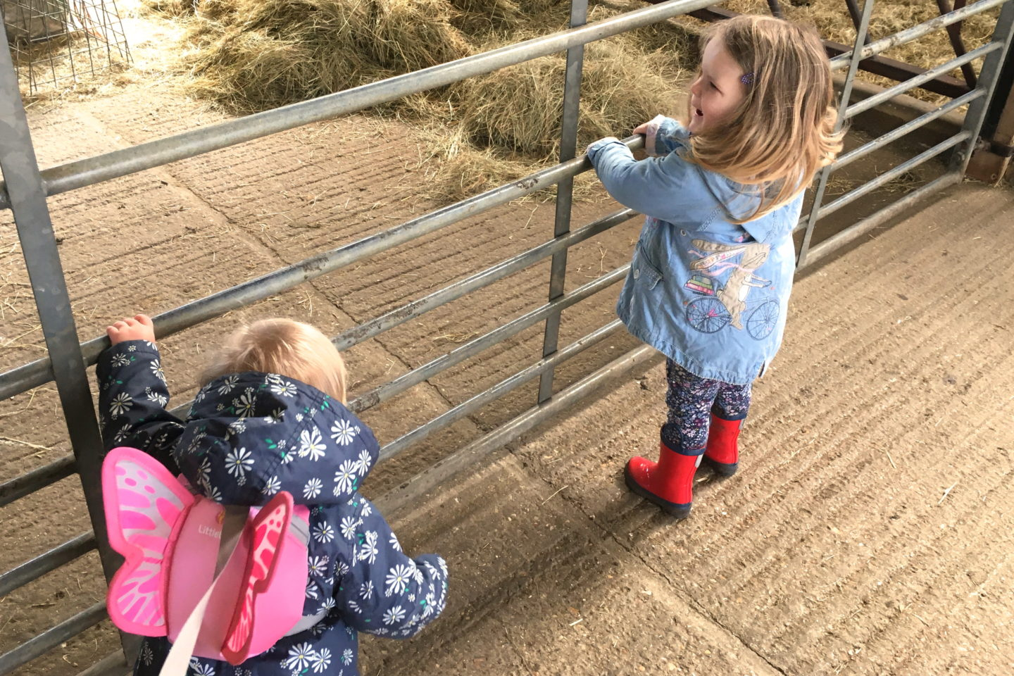 sisters standing together, looking into a farm pen